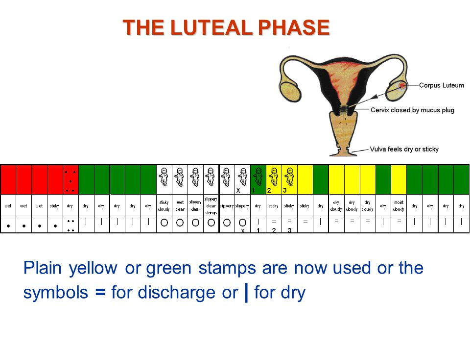 THE LUTEAL PHASE Plain yellow or green stamps are now used or the symbols = for discharge or | for dry.