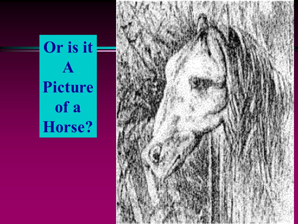 Or is it A Picture of a Horse