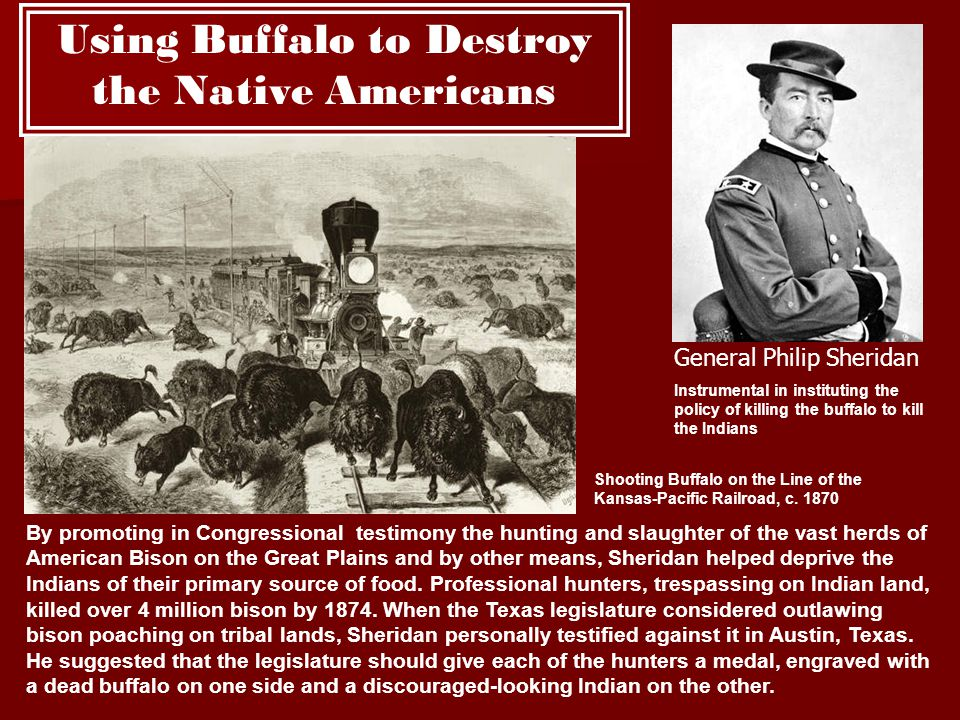 Using Buffalo to Destroy the Native Americans