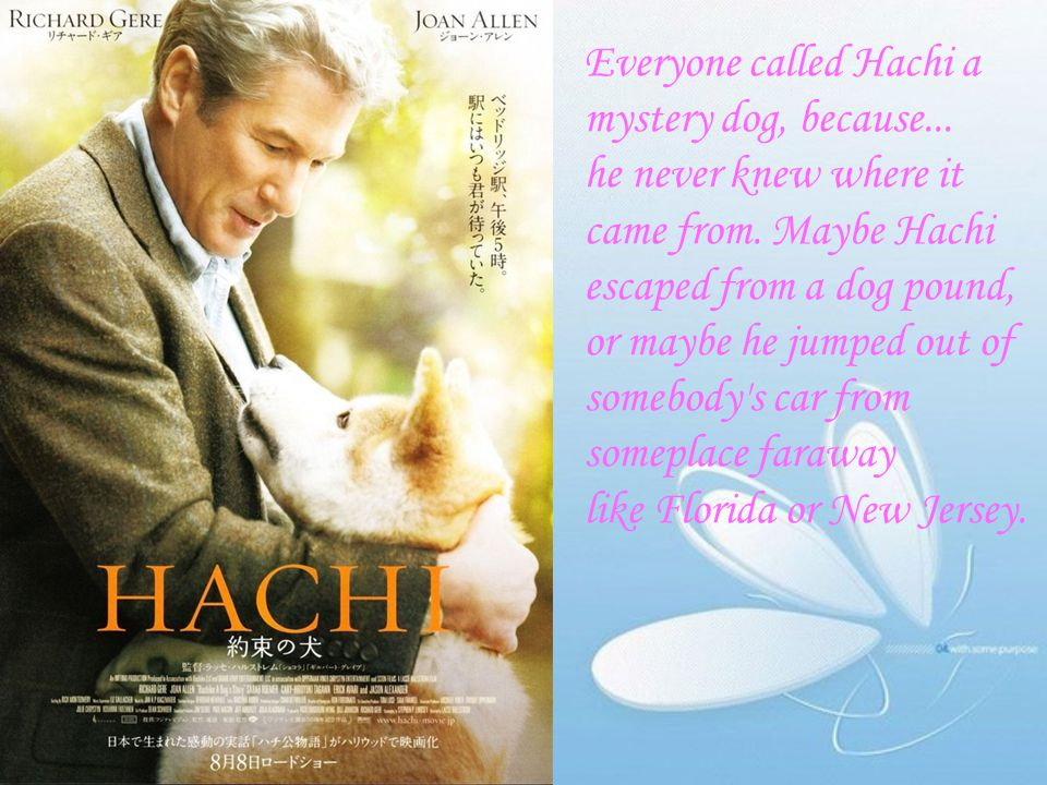 Everyone called Hachi a mystery dog, because...
