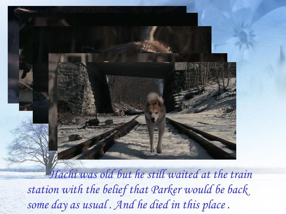 Hachi was old but he still waited at the train station with the belief that Parker would be back some day as usual .