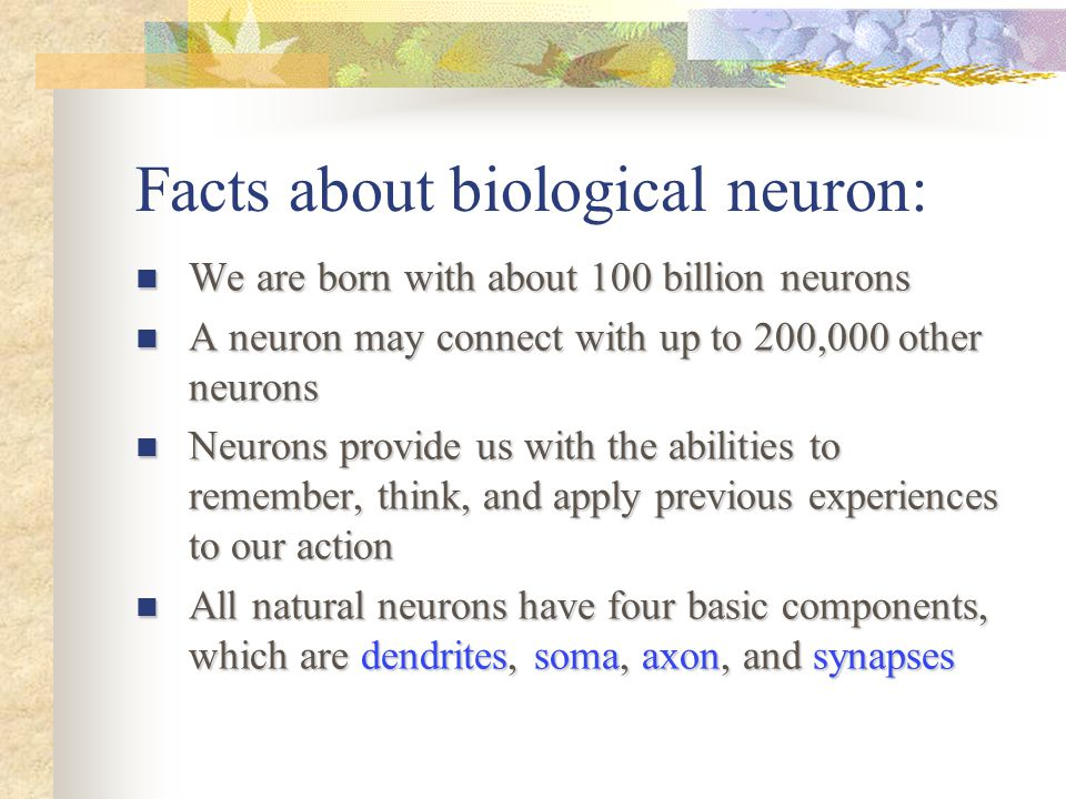 Facts about biological neuron: