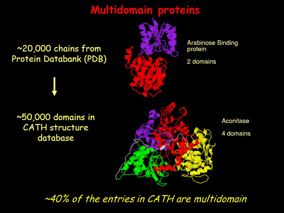 Multidomain proteins ~40% of the entries in CATH are multidomain