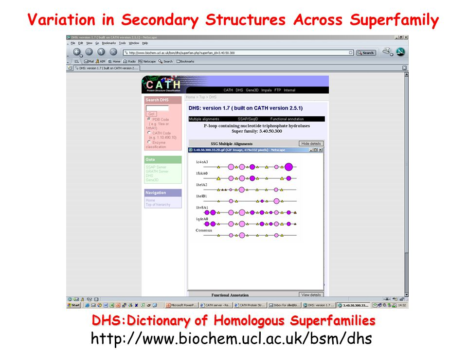 Variation in Secondary Structures Across Superfamily