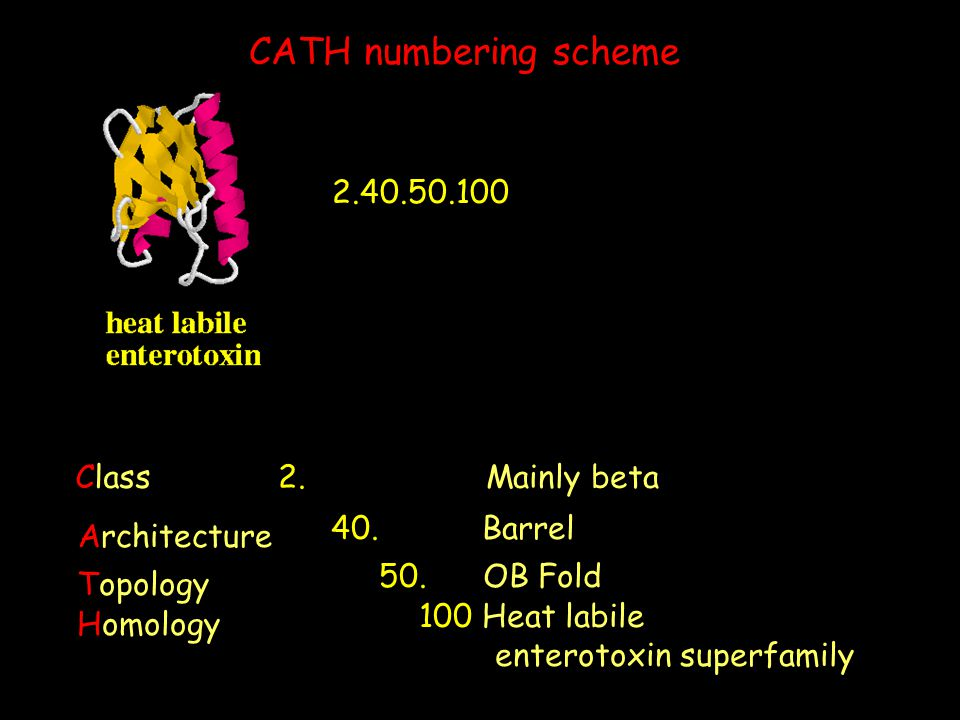 CATH numbering scheme 2.40.50.100 Class 2. Mainly beta 40. Barrel