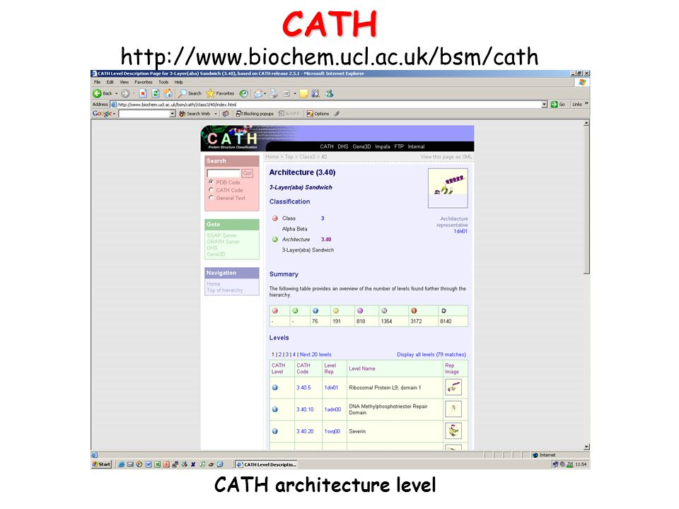 CATH architecture level
