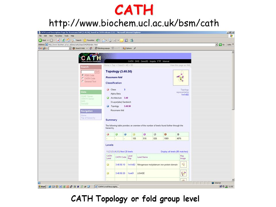 CATH Topology or fold group level