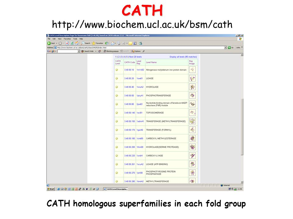CATH homologous superfamilies in each fold group