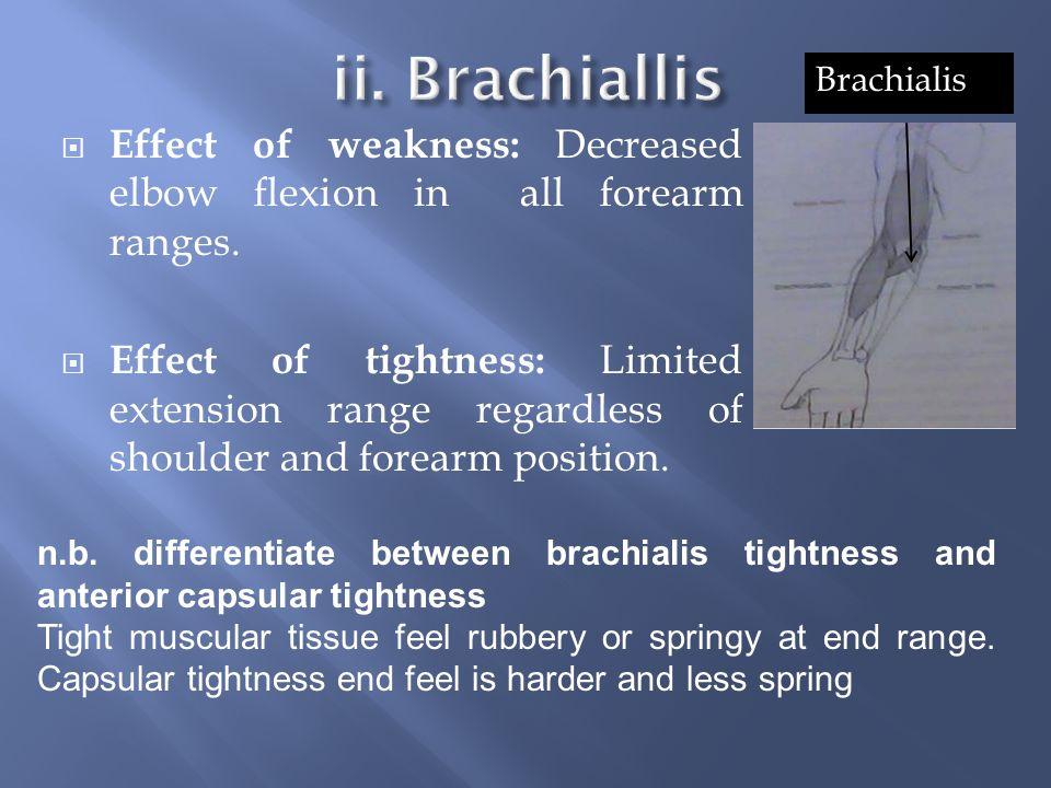 ii. Brachiallis Brachialis. Effect of weakness: Decreased elbow flexion in all forearm ranges.