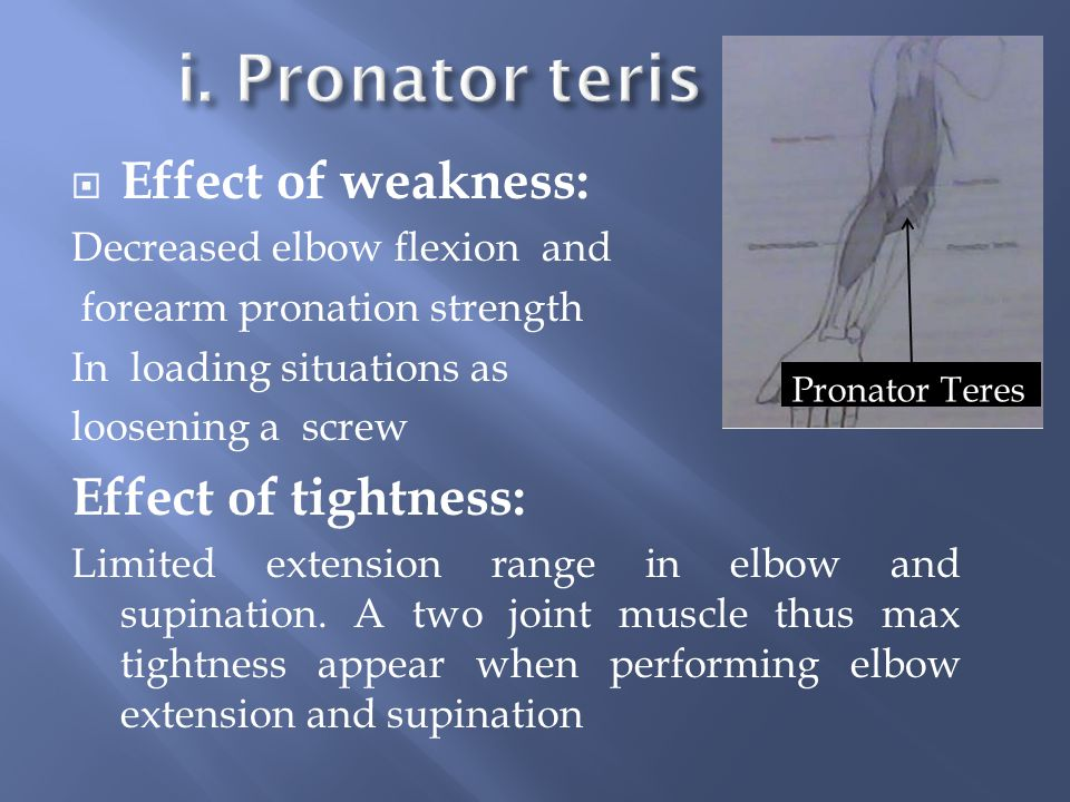 i. Pronator teris Effect of weakness: Effect of tightness:
