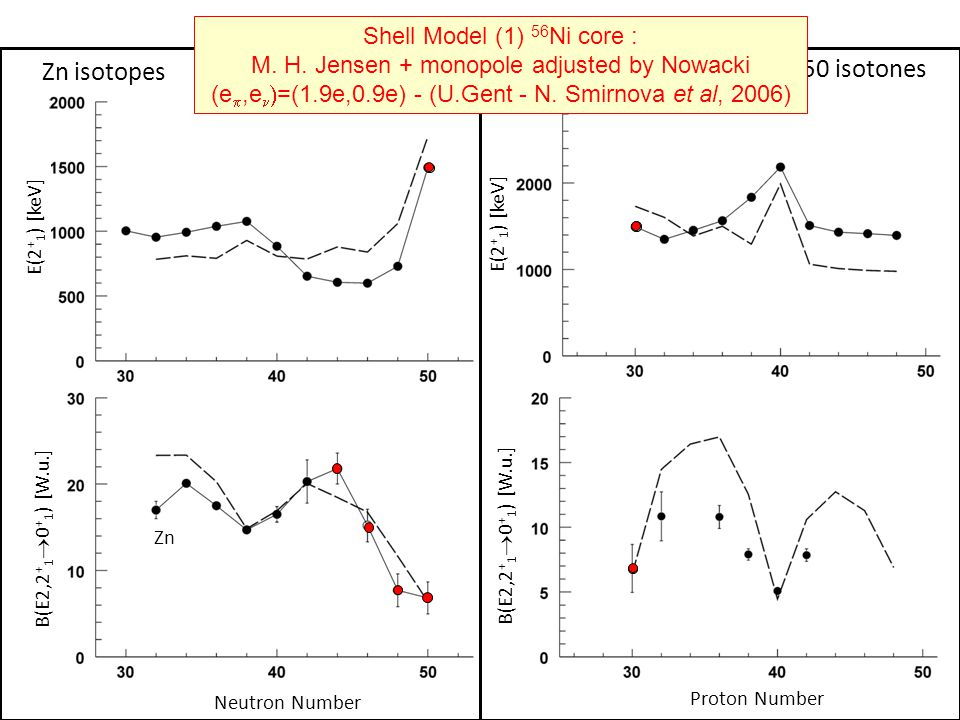 Zn isotopes N=50 isotones Shell Model (1) 56Ni core :