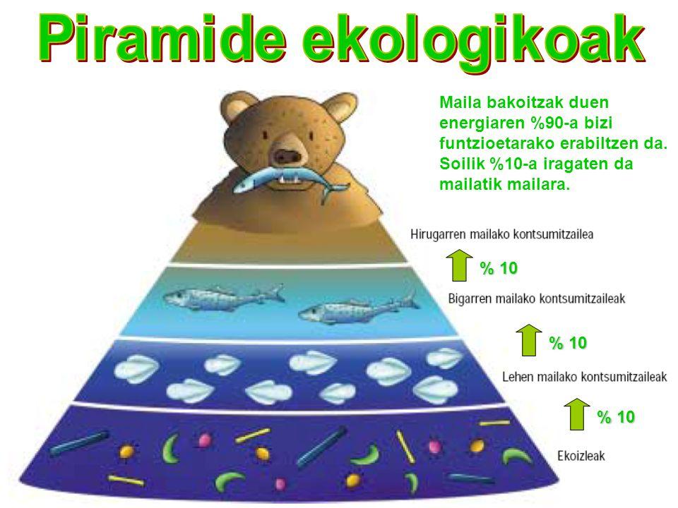 Piramide ekologikoak Maila bakoitzak duen energiaren %90-a bizi funtzioetarako erabiltzen da. Soilik %10-a iragaten da mailatik mailara.