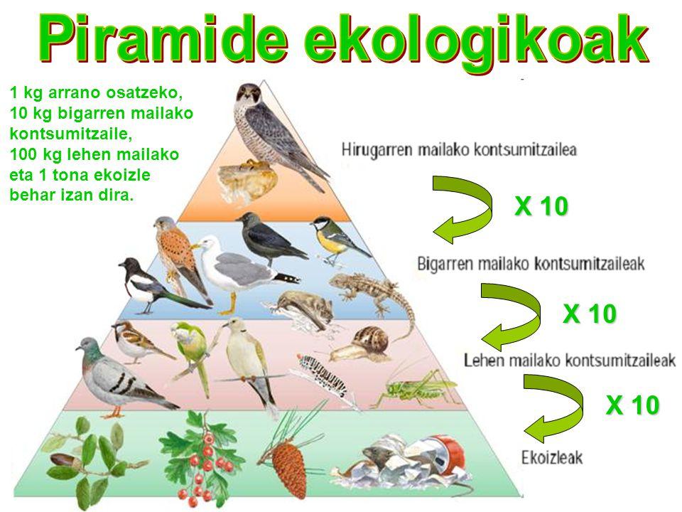 X 10 X 10 X 10 Piramide ekologikoak