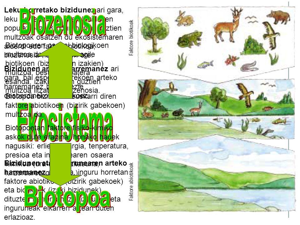 Biozenosia Biozenosia Ekosistema Biotopoa Biotopoa
