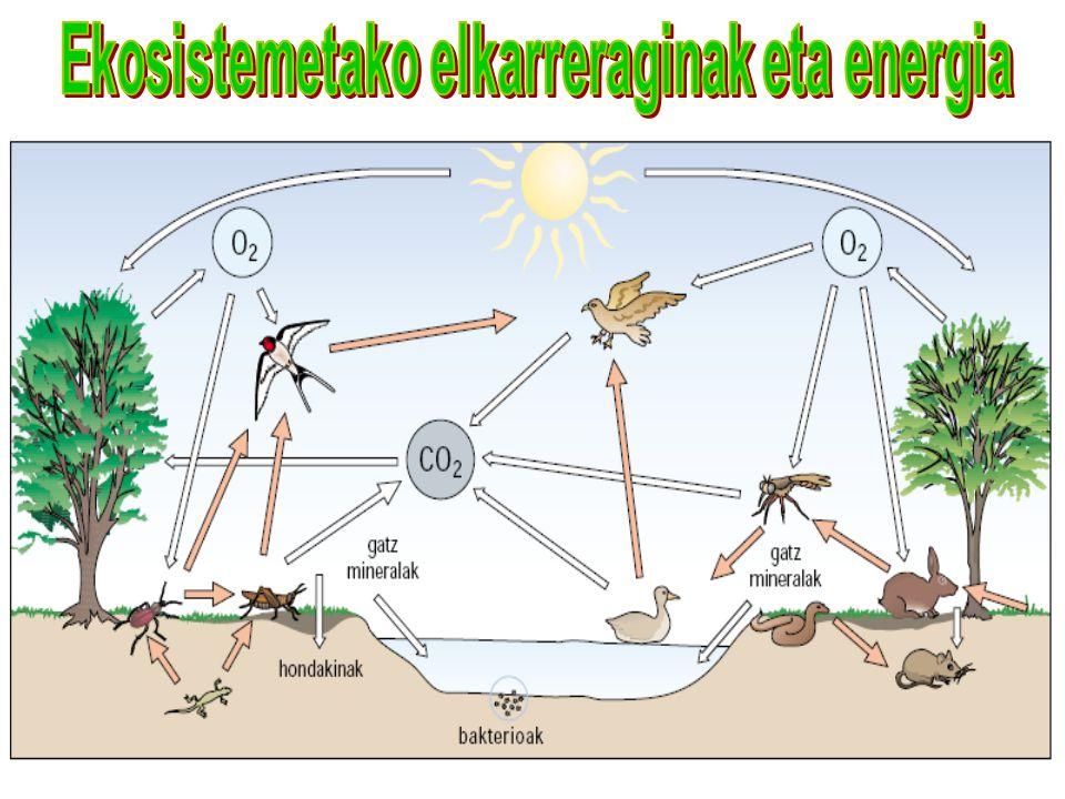 Ekosistemetako elkarreraginak eta energia