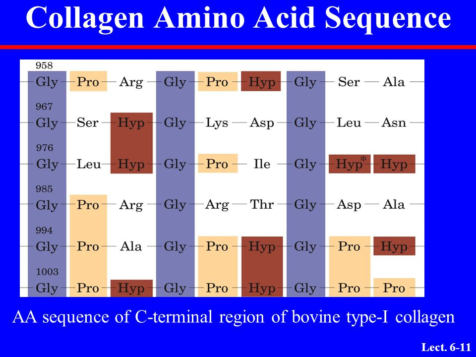 Collagen Amino Acid Sequence