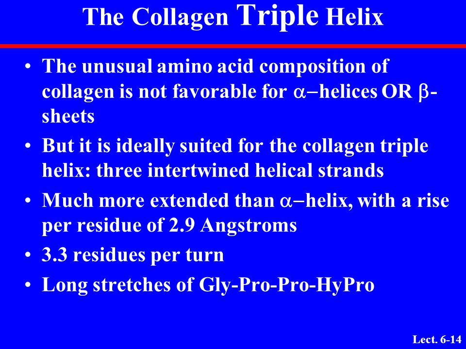 The Collagen Triple Helix