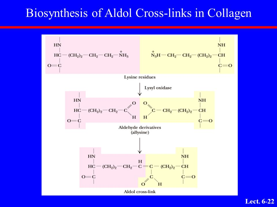 Biosynthesis of Aldol Cross-links in Collagen
