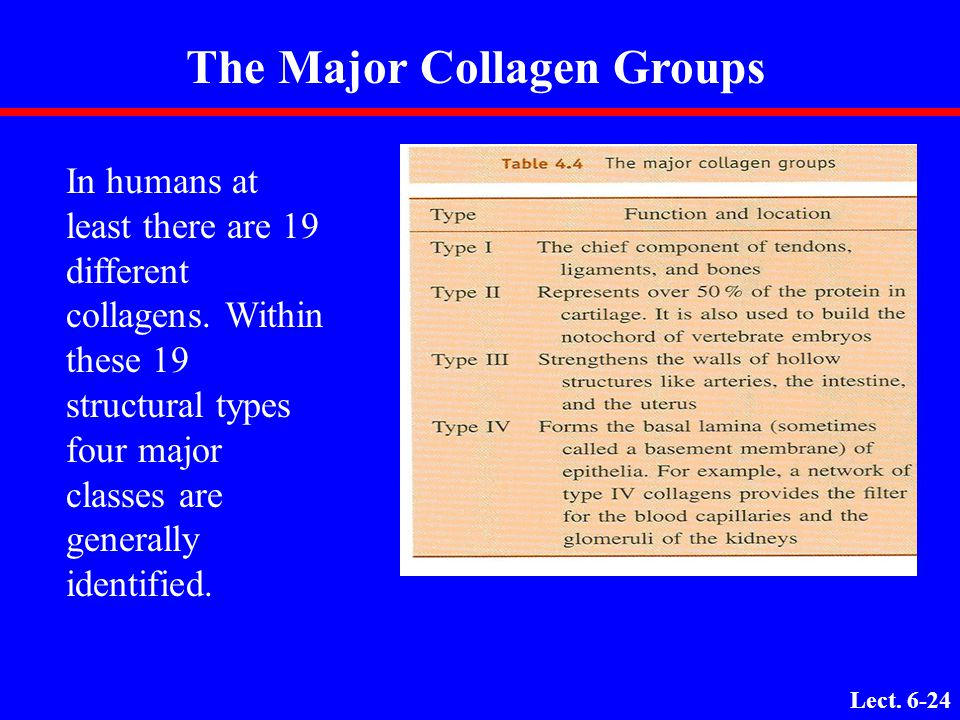 Lecture 9: Fibrous Proteins