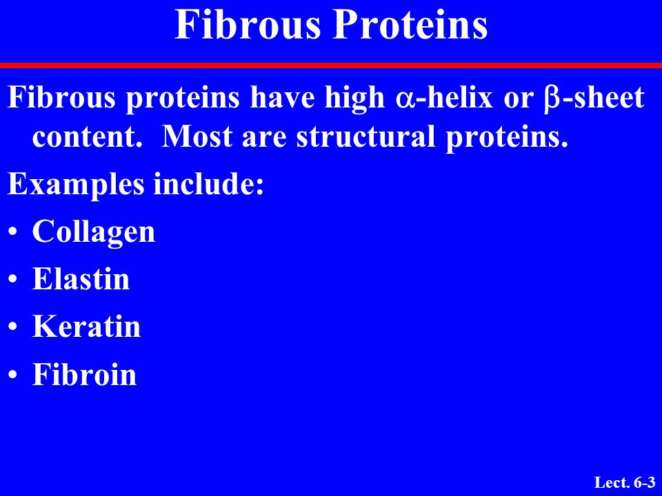 Fibrous Proteins Fibrous proteins have high a-helix or b-sheet content. Most are structural proteins.