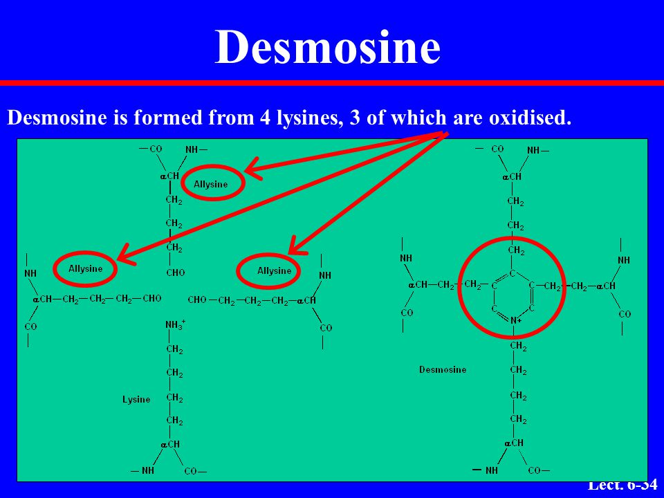 Desmosine Desmosine is formed from 4 lysines, 3 of which are oxidised.