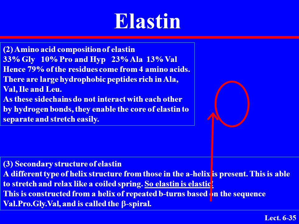 Elastin (2) Amino acid composition of elastin