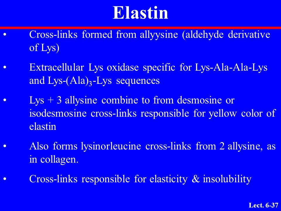 Elastin Cross-links formed from allyysine (aldehyde derivative of Lys)