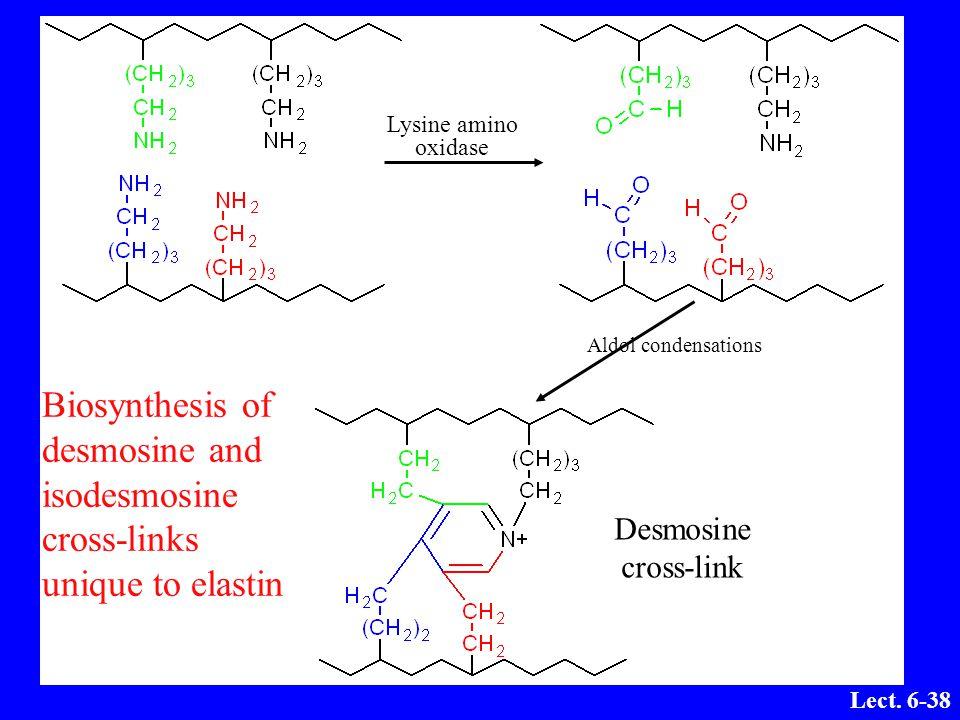 Lysine amino oxidase. Aldol condensations. Desmosine.