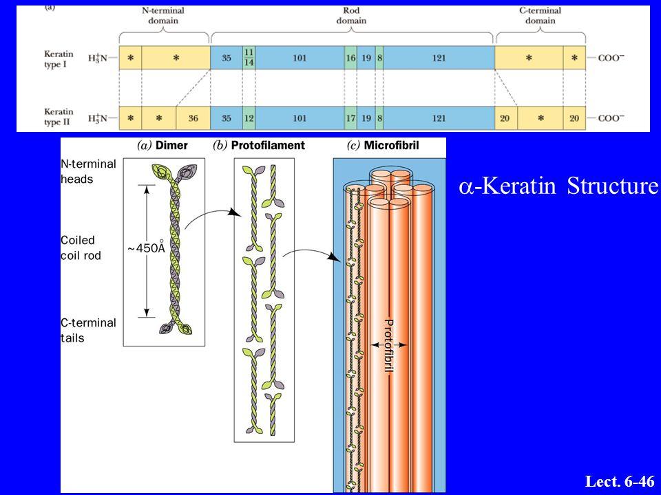 a-Keratin Structure