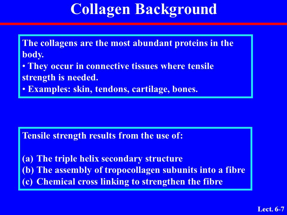 Collagen Background The collagens are the most abundant proteins in the body. They occur in connective tissues where tensile strength is needed.