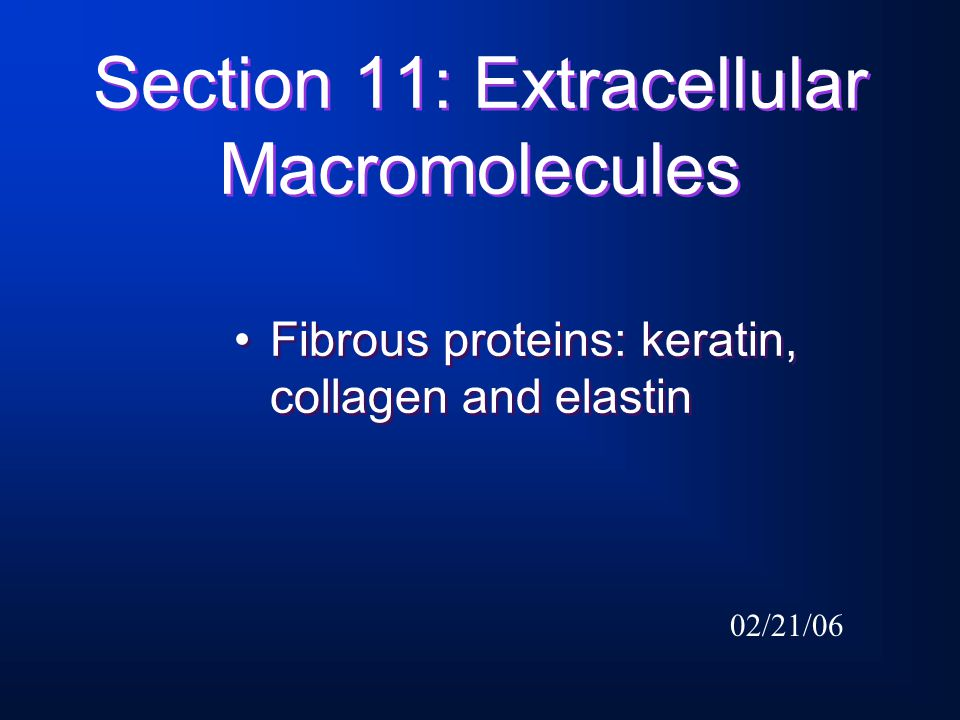 Section 11: Extracellular Macromolecules