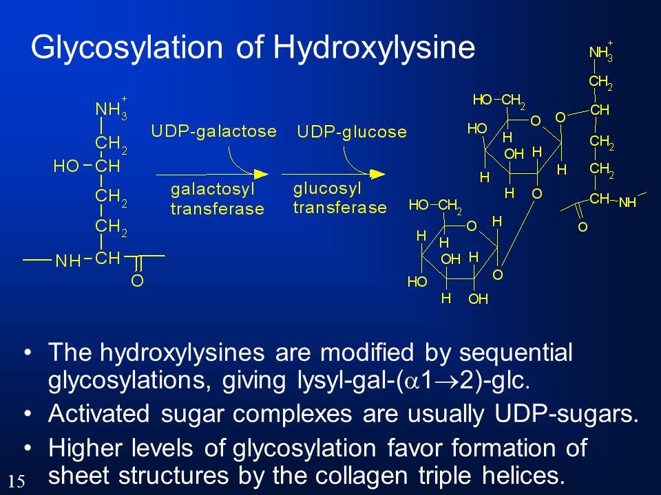 Glycosylation of Hydroxylysine