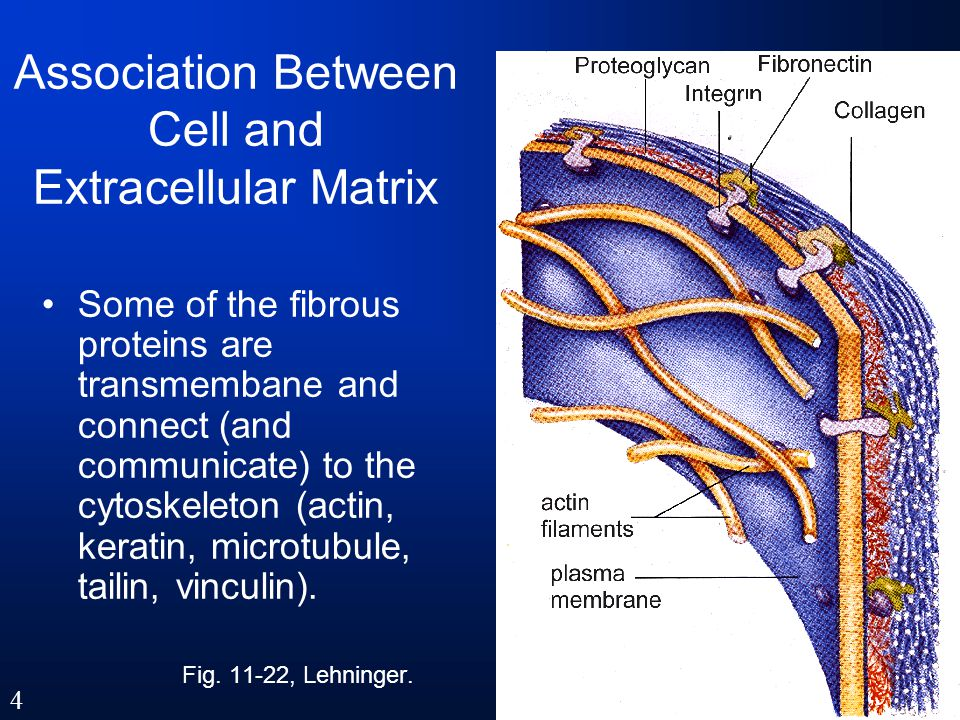 Association Between Cell and Extracellular Matrix