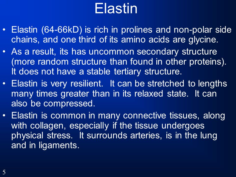 Elastin Elastin (64-66kD) is rich in prolines and non-polar side chains, and one third of its amino acids are glycine.