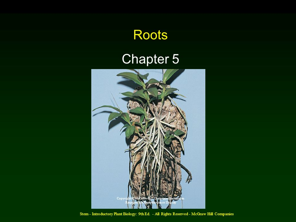 Roots Chapter 5. Copyright © McGraw-Hill Companies Permission. Required for Reproduction or Display.