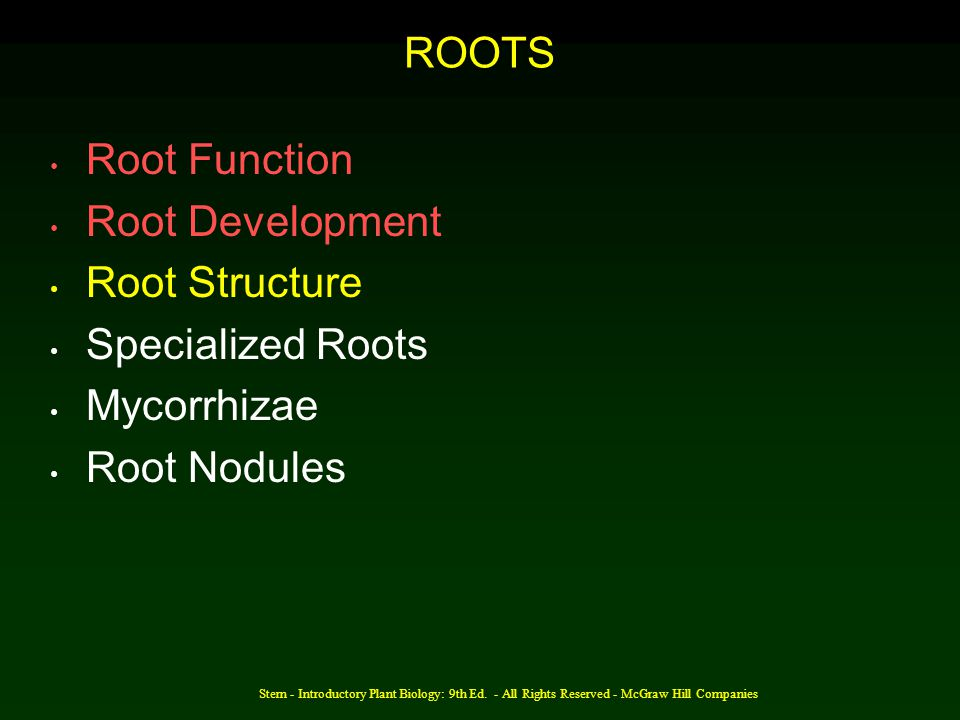 ROOTS Root Function Root Development Root Structure Specialized Roots