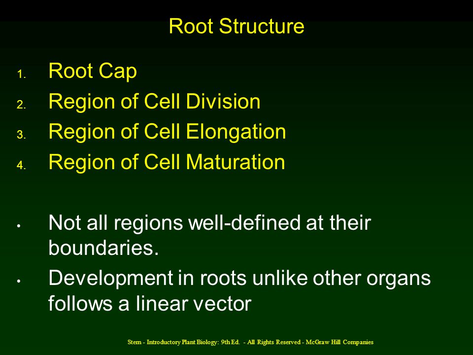 Region of Cell Division Region of Cell Elongation
