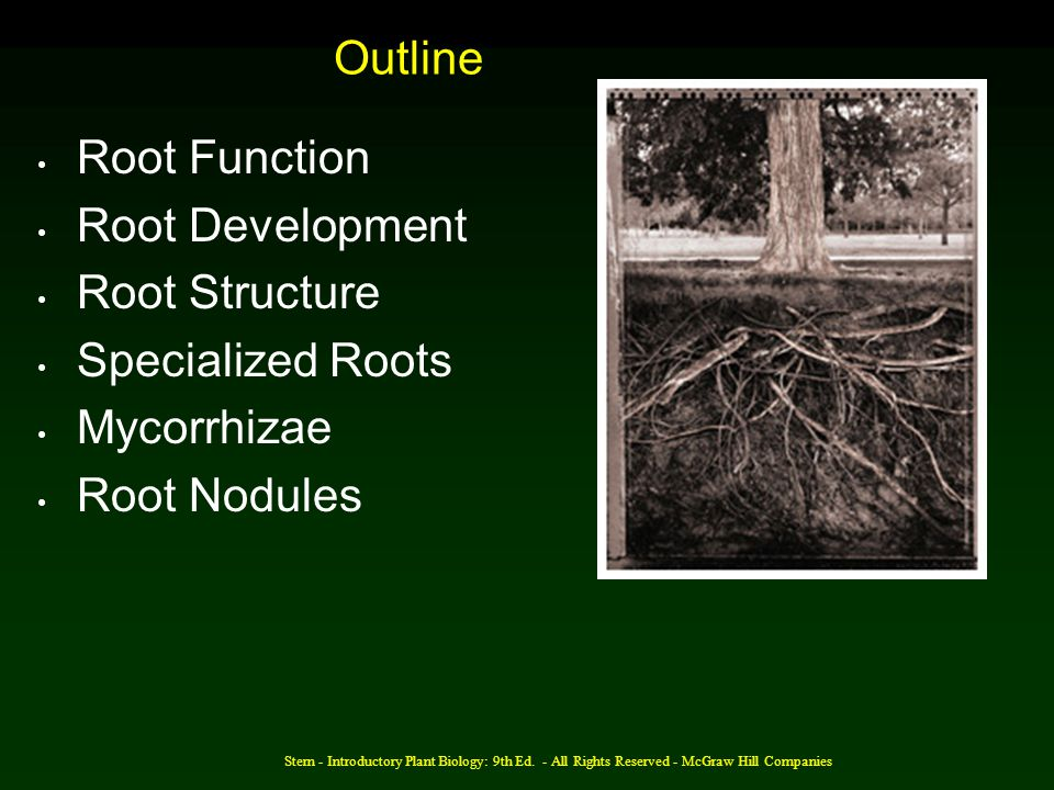 Outline Root Function Root Development Root Structure