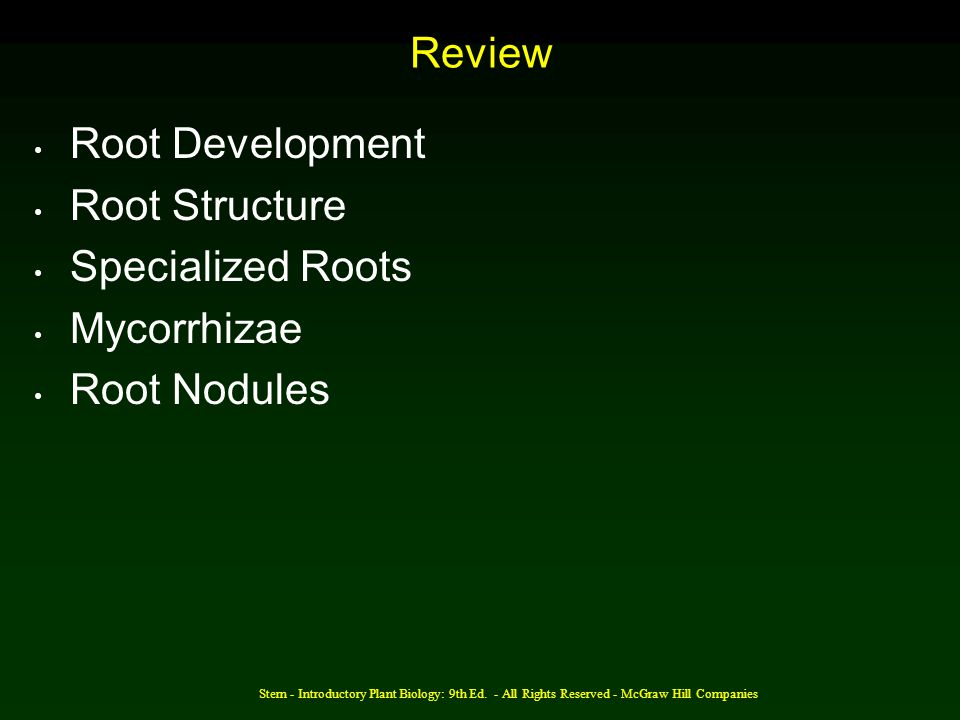 Review Root Development Root Structure Specialized Roots Mycorrhizae