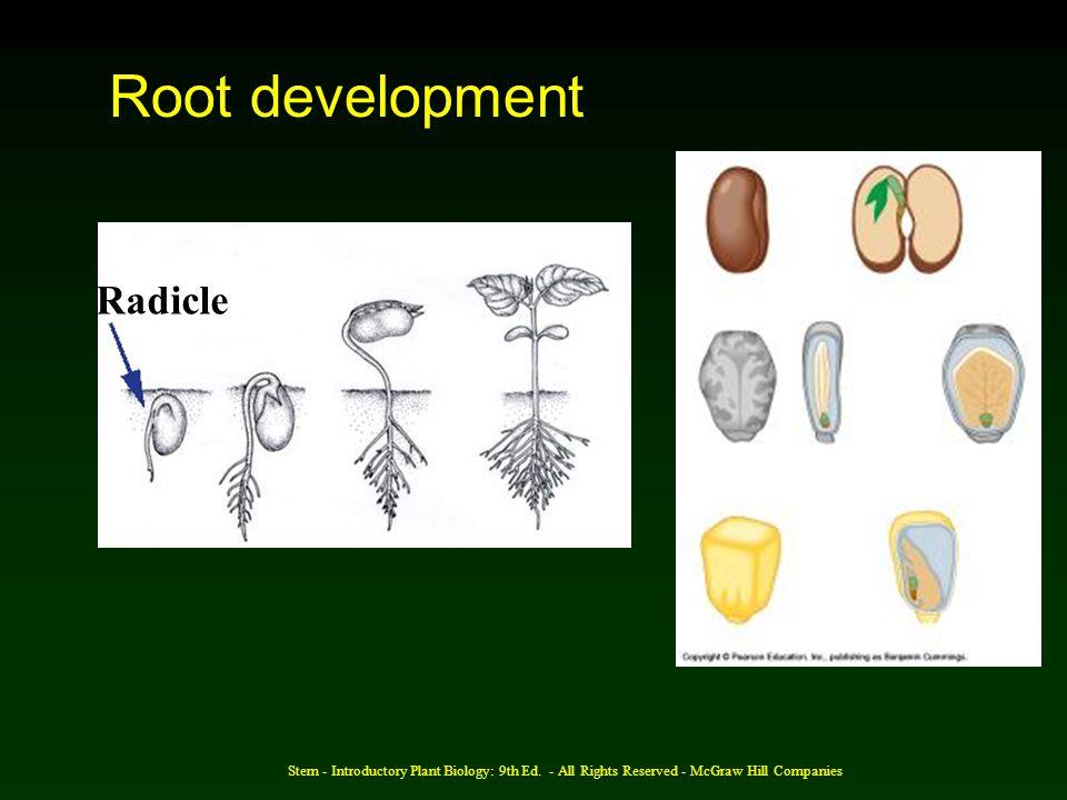 Root development Radicle
