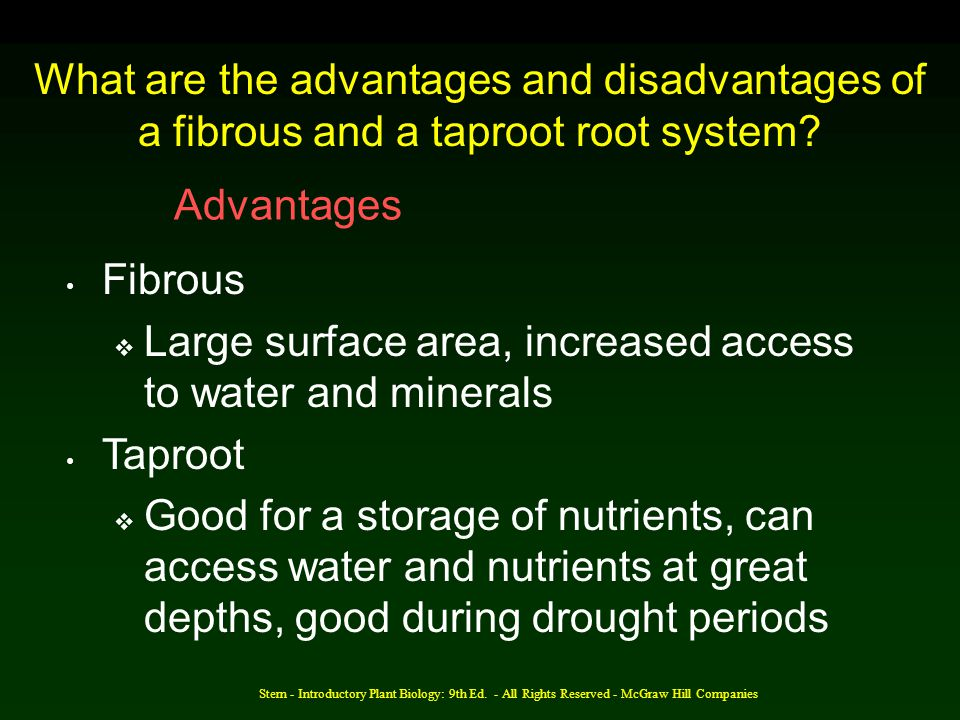 Large surface area, increased access to water and minerals Taproot