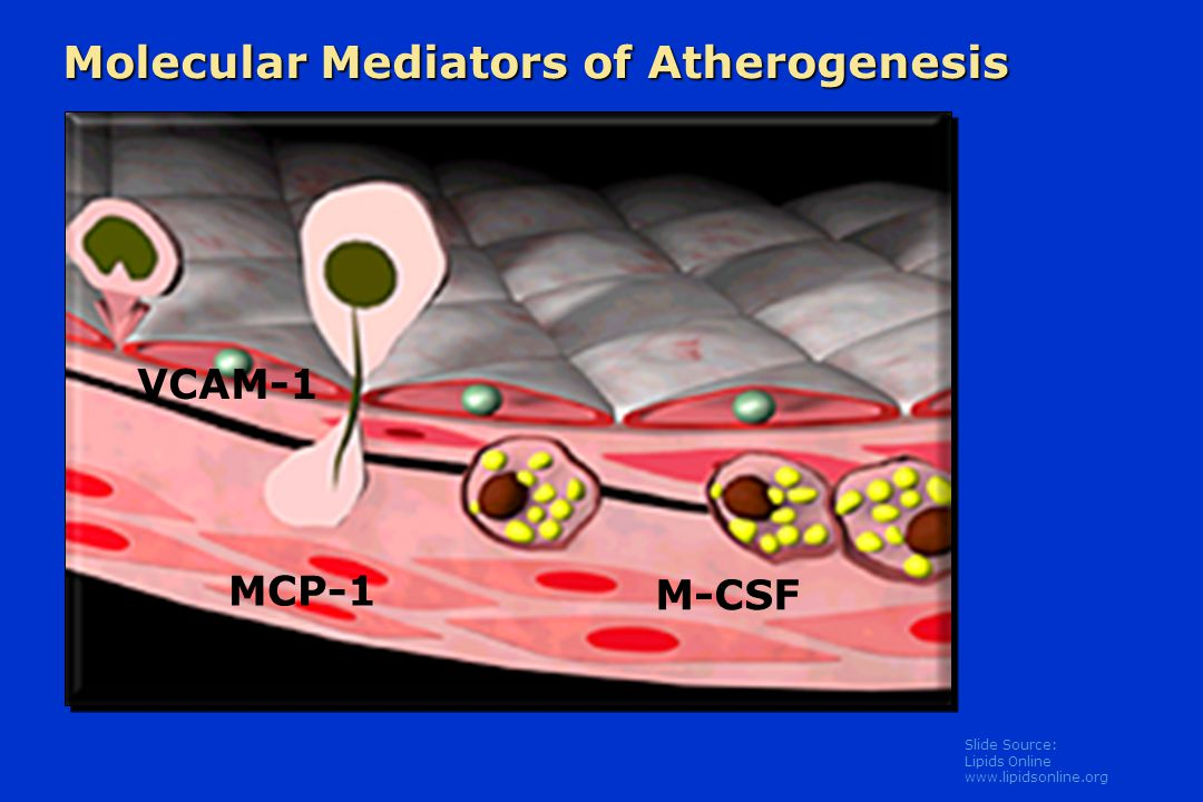Molecular Mediators of Atherogenesis