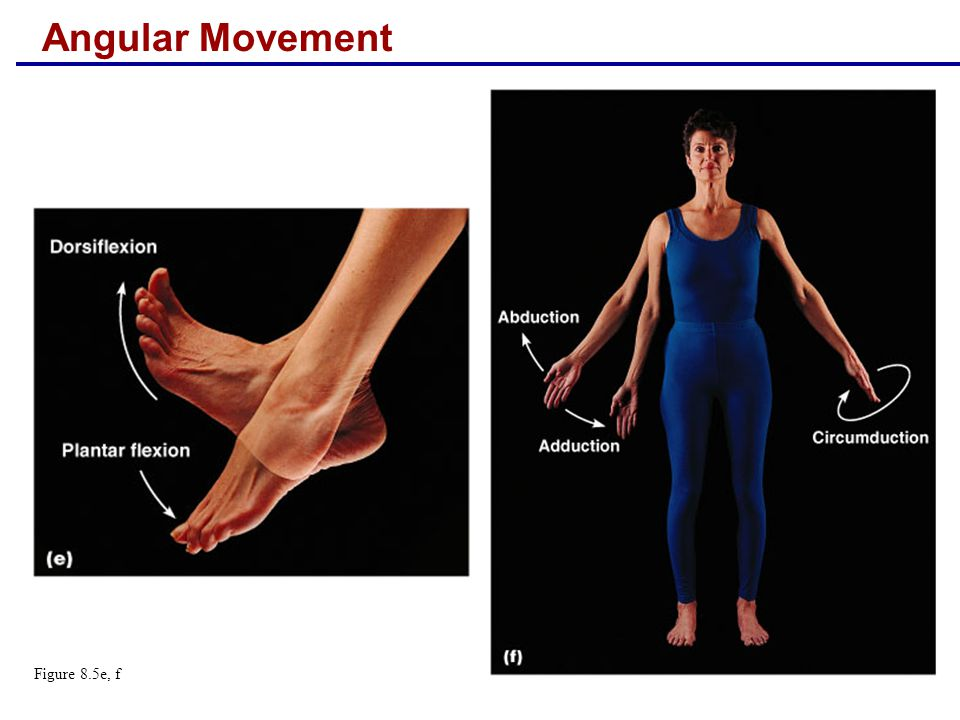 Angular Movement Figure 8.5e, f