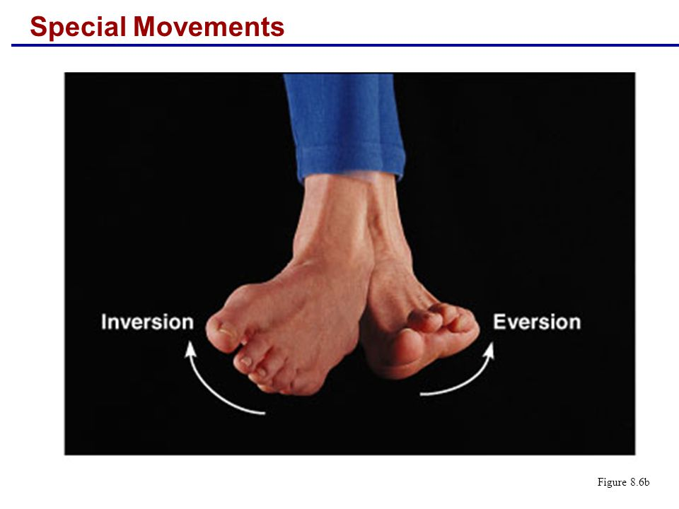 Special Movements Figure 8.6b