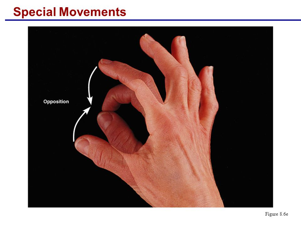Special Movements Figure 8.6e