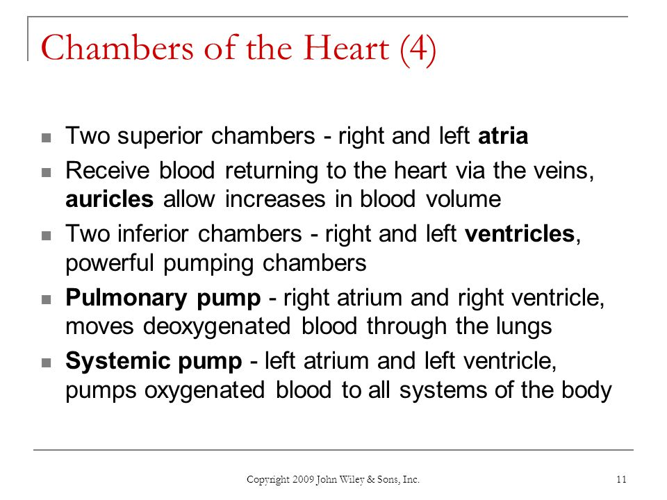 Chambers of the Heart (4)