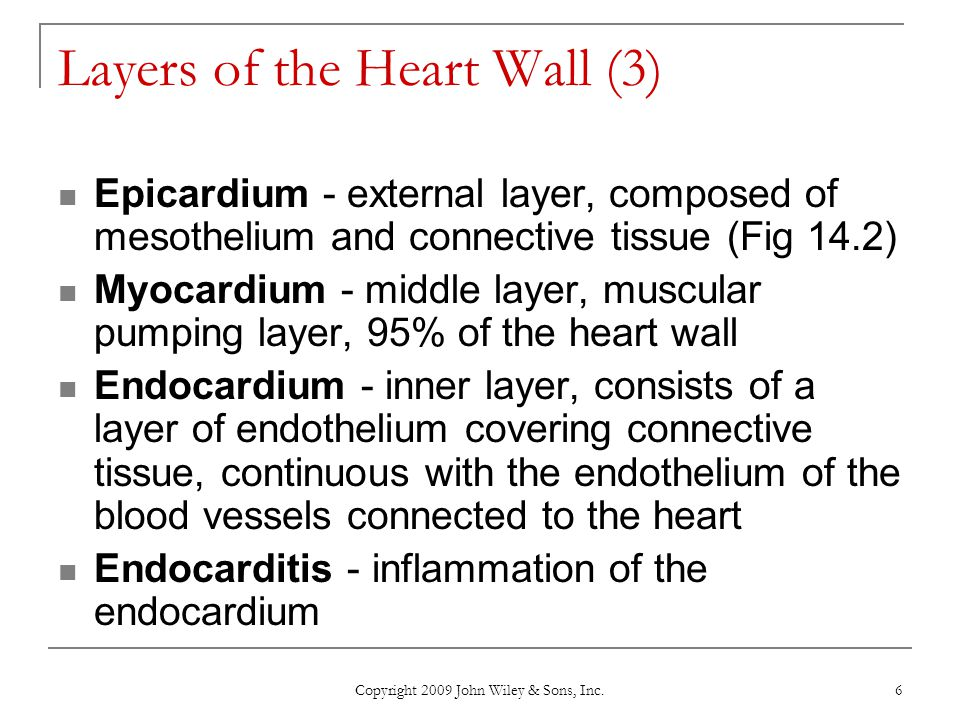 Layers of the Heart Wall (3)