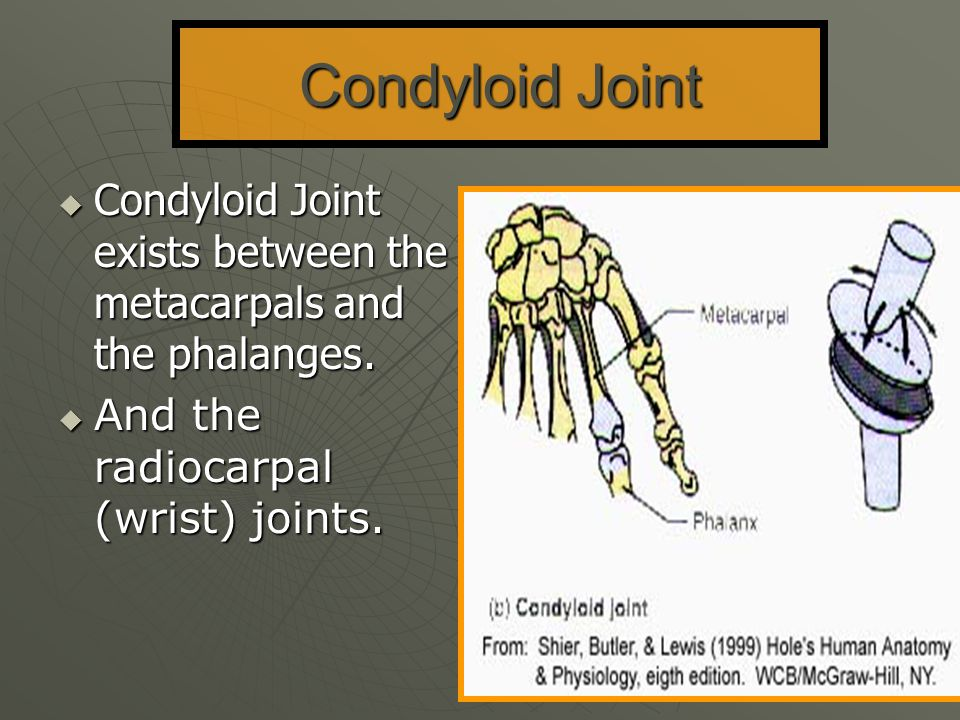 Condyloid Joint Condyloid Joint exists between the metacarpals and the phalanges.