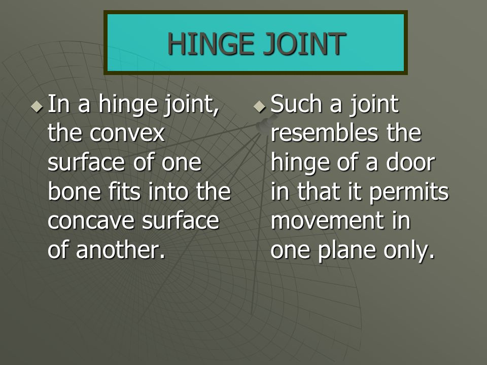 HINGE JOINT In a hinge joint, the convex surface of one bone fits into the concave surface of another.