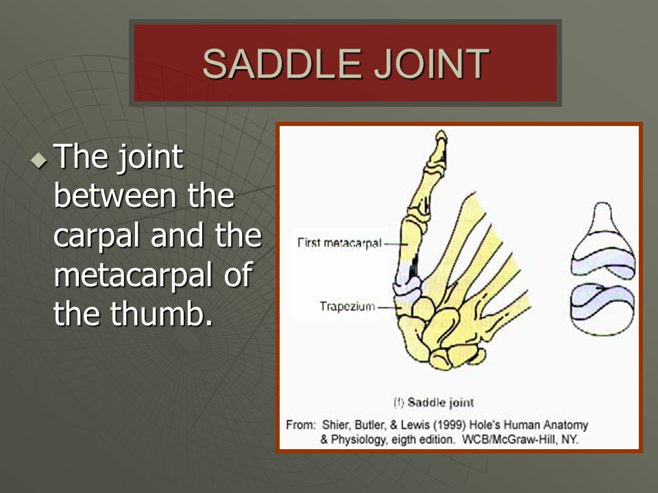 SADDLE JOINT The joint between the carpal and the metacarpal of the thumb.